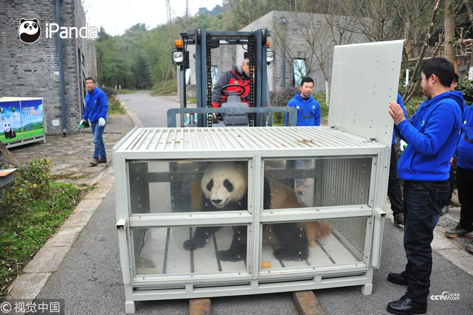 The two pandas have been given Finnish names. Hua Bao will be known as Pyry (snowfall) and Jin Baobao has been named Lumi (snow).