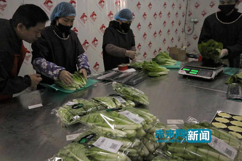 五联村的妇女在基地内打包分装蔬菜。 未来网记者 梁希理 摄。