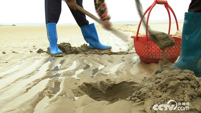 沙子里蠕动的千万财富