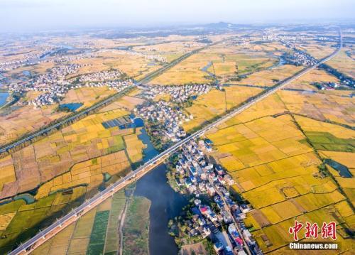 资料图:航拍通过江西都昌县金秋田野上的九景衢铁路。 傅建斌 摄