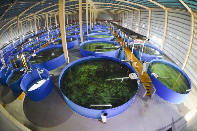 """这是泉盈科技大型海洋生态综合项目一角。位于福建省诏安县的泉盈科技大型海洋生态综合项目引进节能环保的零排放再循环水养殖系统,在室内发展""""蓝色经济"""",既不受气候、环境、地理位置的影响,又通过水资源的循环利用实现零污染零排放。(新华社记者宋为伟 摄)"""