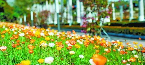 灯塔公园里的鲜花次第开放