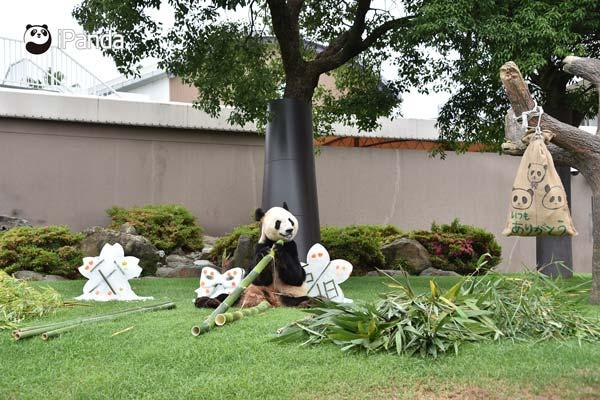 """大熊猫""""永明"""""""
