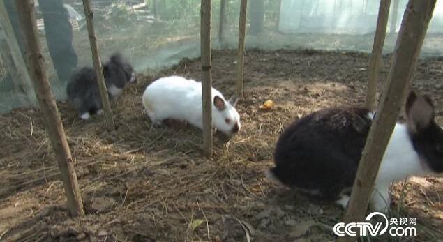 小白兔跨栏又奔跑,还苦练梅花桩