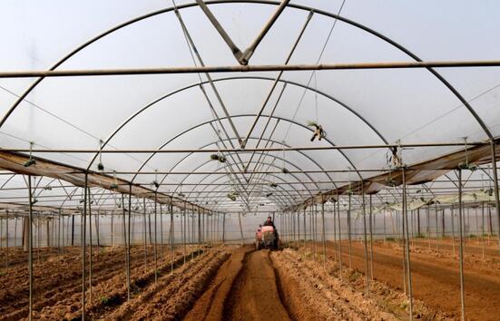 河南省温县赵堡镇一位农民在大棚里整理耕地。