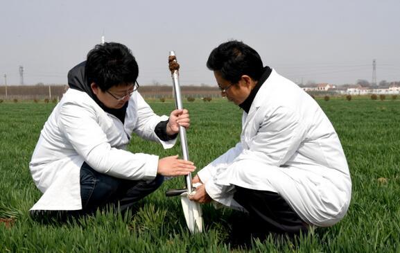 河南省温县农林局植保站高级农艺师张同庆(右)和同事一起在麦田采集土壤样本。