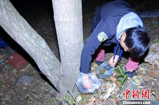工作人员采集大熊猫的粪便