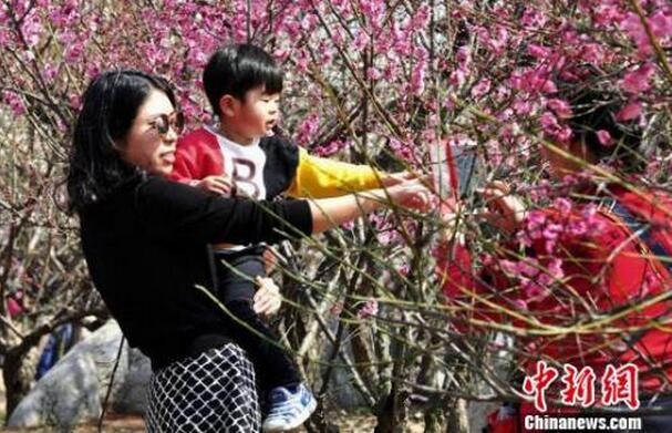 3月12日,徐州民众纷纷相约龟山景区探梅园,前来踏青赏梅,感受春天的气息。