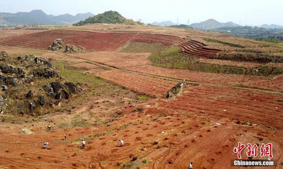 江西省新余市分宜县分宜镇水北村村民抢抓晴好天气,在原2000多亩的废旧矿山区,忙于为果树人工授粉,为高产油茶的土地平整种植。