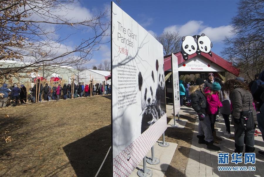 游客排队等候参观大熊猫