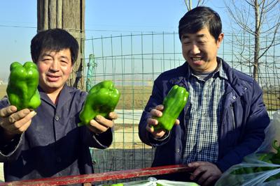 """【了不起的奋斗者】""""蔬菜书记""""用大棚""""种""""出幸福村"""