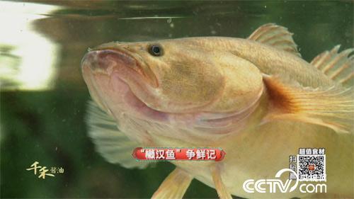 """食尚大转盘:""""懒汉鱼""""争鲜记 20180401"""