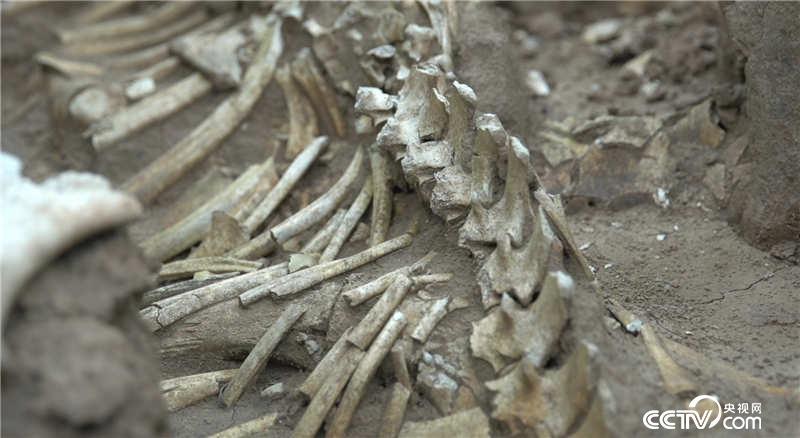 22:48 考古人员在血池村附近找到了秦汉时期的祭天台和祭祀坑如此大