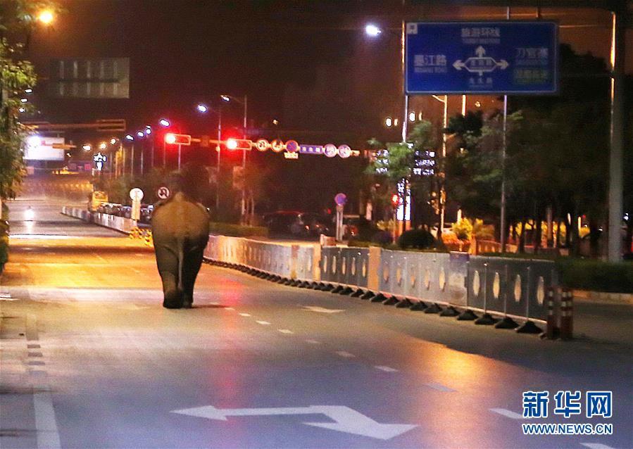 Yunnan : une route occupée par un éléphant