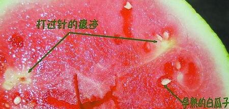 催熟的西瓜是这样子的