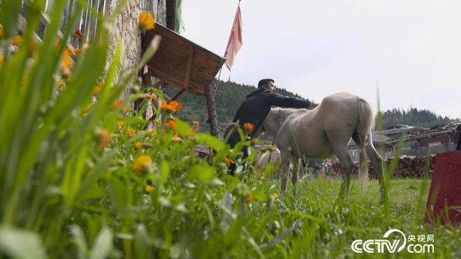 乡土:人和动物的故事 4月13日