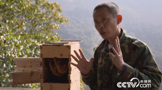 """绿色时空:寻找自然养蜂的""""真相"""" 4月15日"""