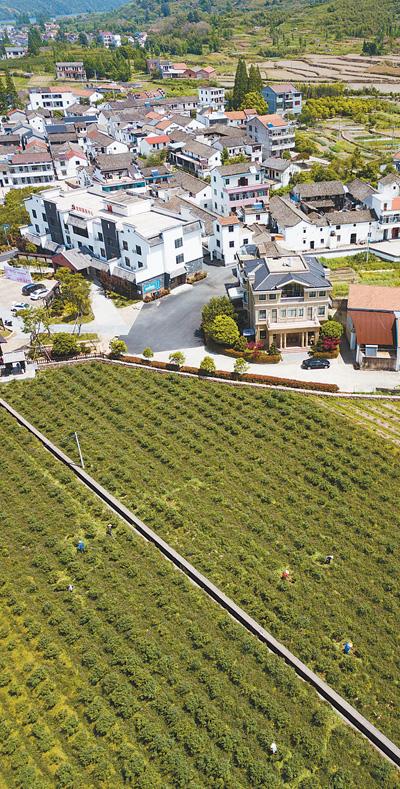 壮大蓝莓产业 实现强村富民