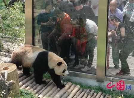 Visitors take photos of a giant panda at Qianling Mount Park on April 22. [Photo/china.com.cn]