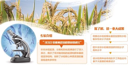科学家水稻基因研究成果发布 设计水稻不再是梦