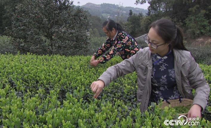 乡土:行走阡陌乡村振兴中国行 高县清明会 5月3日