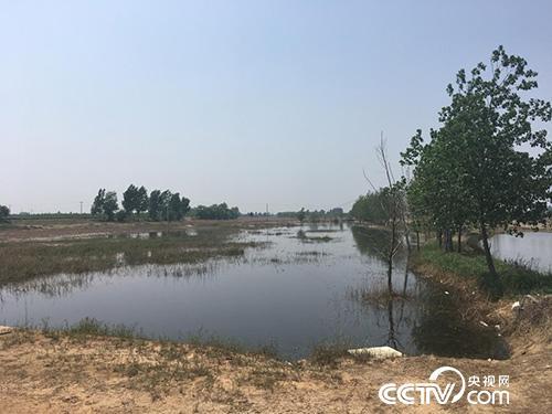 河北省晋州市滹沱河排污口附近形成巨大的蓄水坑,坑内的水呈现黑色。(徐辉 摄)