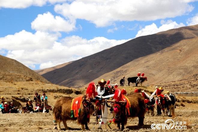 藏族同胞在田间进行春耕