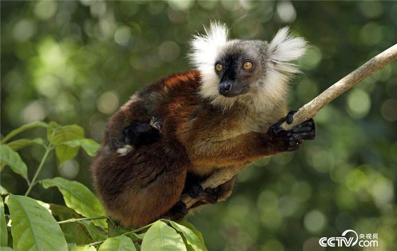 自然传奇 节目预告 动物的智慧生存 5月22日