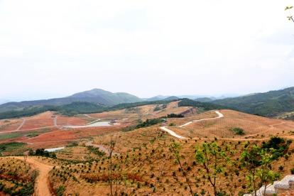 红山村的果业基地