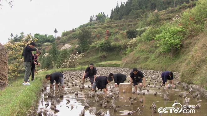 乡土:乡土中国 品味雷山 5月30日