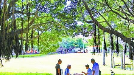 前两天是难得的凉爽天,有市民在树下悠然下棋