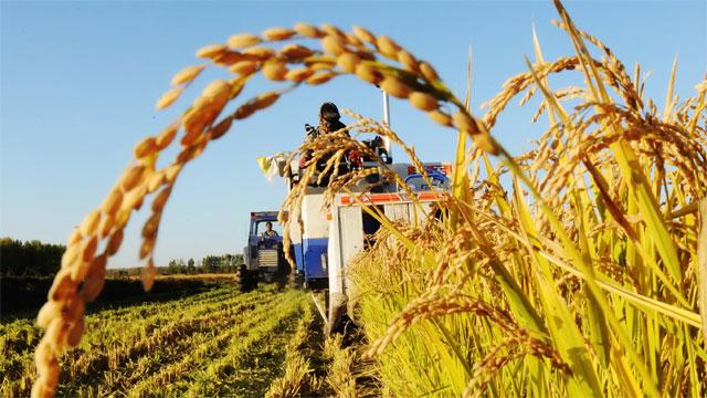 农业农村部、财政部赴15个省份督导这一件大事