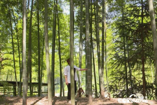 绿色时空:竹子扎堆 攀比身价 7月1日