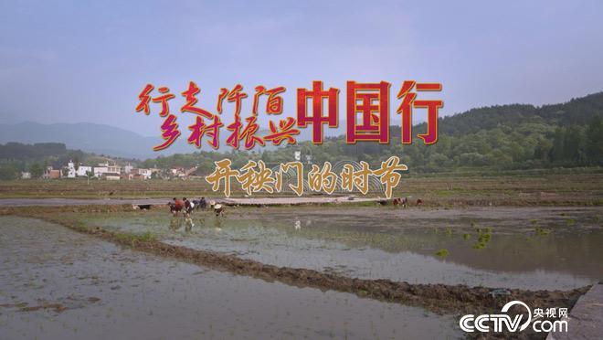 乡土:行走阡陌 乡村振兴中国行 开秧门的时节 7月2日