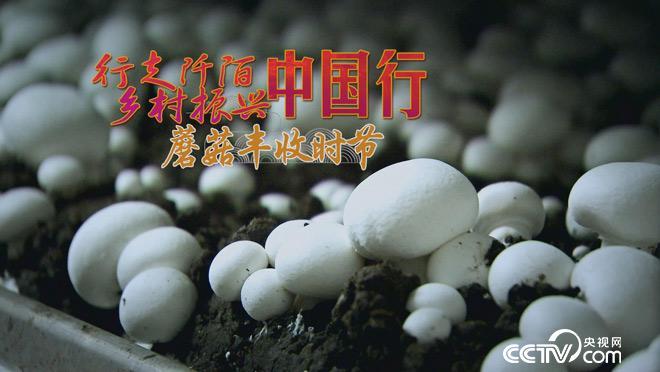乡土:行走阡陌 乡村振兴中国行 蘑菇丰收时节 7月6日
