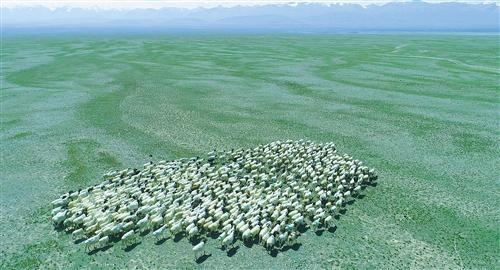 牛羊转场 生态轮牧(图)