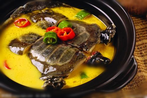 甲鱼宴(资料图)