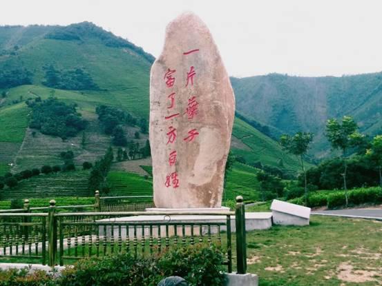 """安吉县黄杜村白茶基地旁屹立着""""一片叶子富了一方百姓""""石碑。"""