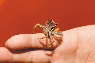 垦丁陆蟹。台湾《联合报》资料图
