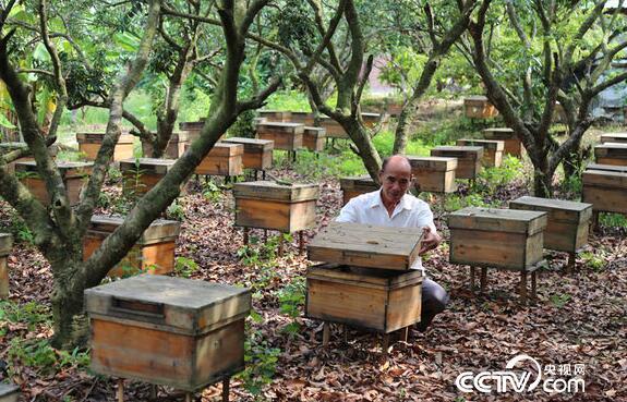养殖户查看蜂群情况