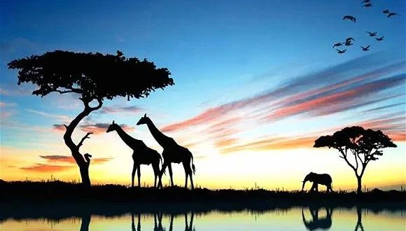 你向往的美景和生活方式 没想到在南非都可以找得到