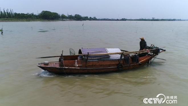 乡土:运河岸边的平望 7月30日