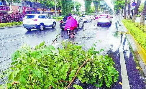 昨日部分路边树木的树枝被大风吹断。