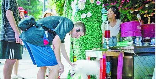 澳大利亚球员在鼓浪屿上与店家的宠物亲密玩耍
