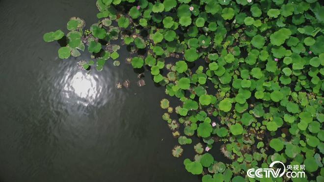 乡土:我们向往的乡村 魅力遂宁安居篇 8月7日