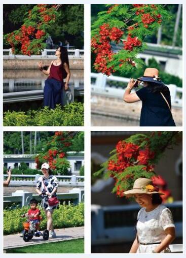 【火红的季节】拍摄地点:中山公园