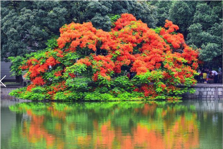 【夕阳红】拍摄地点:中山公园