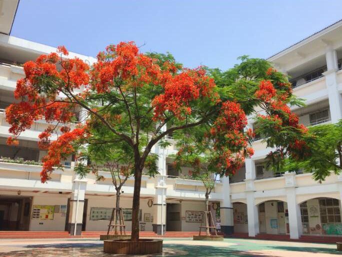 【校园那抹红】拍摄地点:外国语海沧附属学校