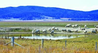 牛羊盼水人着急,澳大利亚旱情重