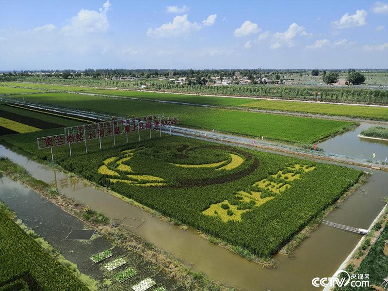 塞上江南,渔米之乡。(高宇婷/摄)